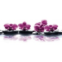 Керамическая плитка  с орхидеями Cerrol Storczyk-2