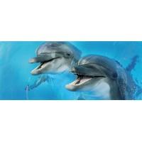TES100151 Porto Dolphins 2 centro 25x60