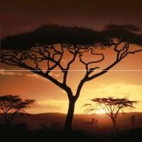 Africa P2-2D210 40x40