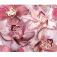 Porto Flowers Orchide lila 50x60