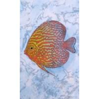 (D403bAR8) D403bAR8 Бриз красная рыба 20x33