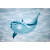 TES102871 Лазурь Дельфин Малыш 25x35