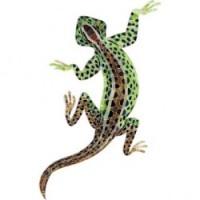 APM- Lizard 20.6x36.5