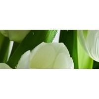 TES105823 Tulip Maxi 3 W 20x50