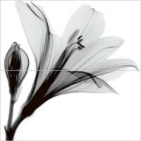 Керамическая плитка  для ванной черно-белая Уралкерамика PWU09EST1