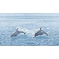 TES102371 Dec Ocean 25x45