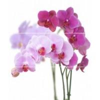 Керамическая плитка  с орхидеями Cerrol TES100062