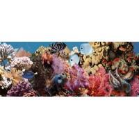TES102377 Ocean Reef 1 20x50