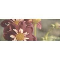 Керамическая плитка  розовая Kerama Marazzi STGA38715050