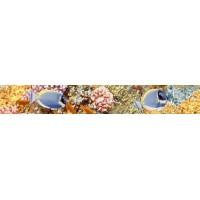 AL-B-RF  Alba Reef 4.5x30