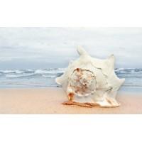 Керамическая плитка для ванной морская волна 121916 Кировская керамика