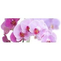 Керамическая плитка  с орхидеями Cerrol TES100014