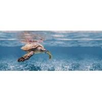 TES102379 Ocean Turtle 20x50