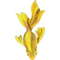 APM- Fish 20.6x36.5