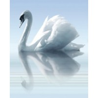 TES100175 Porto Water and Swan A (3xл) 75x60