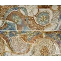Керамическая плитка TES15449 Gracia Ceramica (Россия)