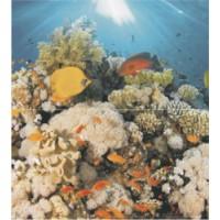 TES102293 Dec Corals Panno (из 2xт) 50x45