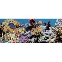 TES102378 Ocean Reef 2 20x50