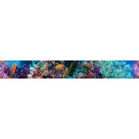TES99906 Coralino Listwa 6.5x50